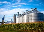 picture of silos  - Corn dryer silos standing in a field of corn - JPG