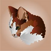 picture of kitty  - Kitty three color head pussy feline vector illustration - JPG