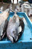 stock photo of fin  - A big tuna fish yellow fin in the fish market - JPG