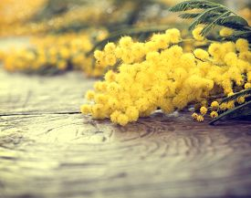 image of yellow buds  - Mimosa spring flowers on the wooden table - JPG
