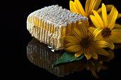 foto of jerusalem artichokes  - honeycombs and flowers of Jerusalem artichoke on a black glass - JPG