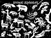 picture of quokka  - Animal alphabet poster for children - JPG