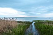 stock photo of rain clouds  - waiting for rain in the reedy shore in the evening light on the background of clouds - JPG