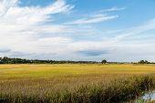 picture of wetland  - Brilliant Green Wetland Marsh Grass Growing Under Blue October Skies - JPG