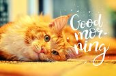 The Concept Is Good Morning. A Beautiful Red Cat Woke Up Early In The Morning. The Inscription On Th poster