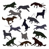 Dog Silhouettes On White Background. Set Of Canine Silhouettes Doing Different Activities. Dog Jumpi poster