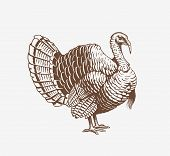 Turkey Hand Drawn Illustration In Engraving Or Woodcut Style. Gobbler Meat And Eggs Vintage Produce  poster