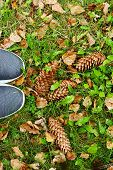 Yellow Foliage And Fir Cones On Green Grass And Shoes On Autumn Background. Legs In Black Shoes Stan poster