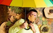Rainy Weather Forecast Concept. Man Bearded Lay On Wooden Background With Leaves Top View. Fall Atmo poster