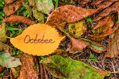 Golden Elm Leaf With Inscription October On Fallen Leaves Background. poster