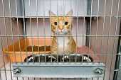 stock photo of caged  - Homeless cat in a cage in an animal shelter - JPG