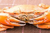 image of cooked blue crab  - Hot Steamed crab and a red color - JPG