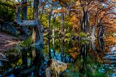 pic of opulence  - Beautiful Bright Fall Foliage on Large Cypress Trees Surrounding the Clear Frio River at Garner State Park - JPG