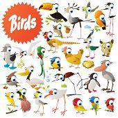 picture of game-cock  - Big vector birds set - JPG