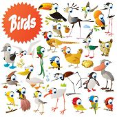 stock photo of game-cock  - Big vector birds set - JPG