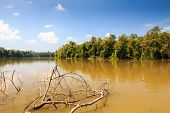 picture of sedimentation  - A thick brown lake in the tropical rainforest of Borneo