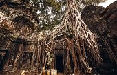 picture of raider  - Angkor Wat Temple in Siem Reap - JPG