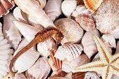 stock photo of seahorses  - background of various seashells starfish and seahorse - JPG
