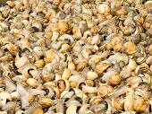 foto of escargot  - Escargot or Snails in a market - JPG
