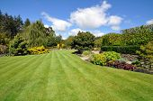 image of manicured lawn  - The lawn trees shrubs and boarders all conbine to make this the classic manicured English country garden - JPG