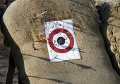 picture of missing  - Arrow range field practice target. Arrows missed target ** Note: Visible grain at 100%, best at smaller sizes - JPG