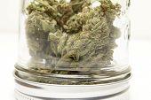 image of ganja  - Marijuana and Cannabis on a White Background - JPG