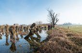 stock photo of flood  - Pruned pollard willows in a flooded field - JPG