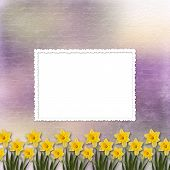 stock photo of narcissi  - Card for invitation or congratulation with bunch of flower - JPG