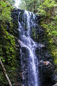 stock photo of redwood forest  - A waterfall deep in the Redwood forests of California - JPG