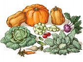 image of root vegetables  - Various vegetables - JPG