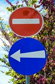 stock photo of judas  - Traffic sign prohibited direction and mandatory sense blue arrow direction on blue sky Cyprus and Judas tree - JPG