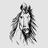 pic of hackney  - Horse scetch by black pencils in eps - JPG