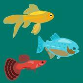 foto of goldfish  - Aquarium fish - JPG