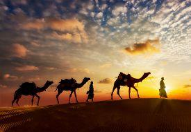 foto of camel  - Travel background  - JPG