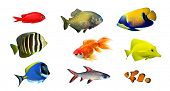 Tropical fish - collection on white background