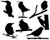 image of nightingale  - vector silhouette of the small birds on branch tree - JPG