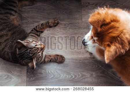 poster of Cat And Dog Play Together. Cat And Dog In The Apartment. Close-up