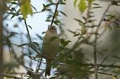 Close Up Of A Sparrow In Nature. Amazing Nature. Close Up Of A Sparrow In Nature. Sparrow. Nature. S poster
