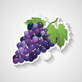 Grapes Sticker Vector Illustration. Cartoon Sticker With White Contour In Comics Style poster