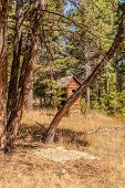 pic of outhouses  - An old blanket and an outhouse in the woods of Montana - JPG