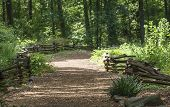 pic of split rail fence  - A wood chip trail between split rail fences in a lush green forest - JPG