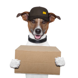 picture of jack-in-the-box  - dog delivery post box with hat and cardboard - JPG