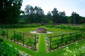 pic of slave-house  - Green vegetable garden at Mount Washington - JPG