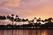 hawaiian pink sunset