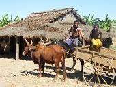 Rural Life In Madagascar