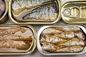 stock photo of hermetic  - Tins of sardines and mackerel in different sizes open isolated on a white background - JPG
