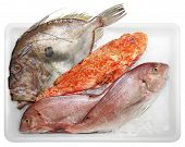stock photo of dory  - Fresh Scorpaenidae John Dory and Dentex quality and delicious fish solated on white background - JPG