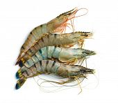 picture of tiger prawn  - raw tiger shrimps on white background - JPG