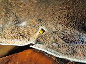 Постер, плакат: Yellow Watchman Goby in its coral home