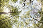 foto of birchwood  - Landscape with a solar birchwood - JPG